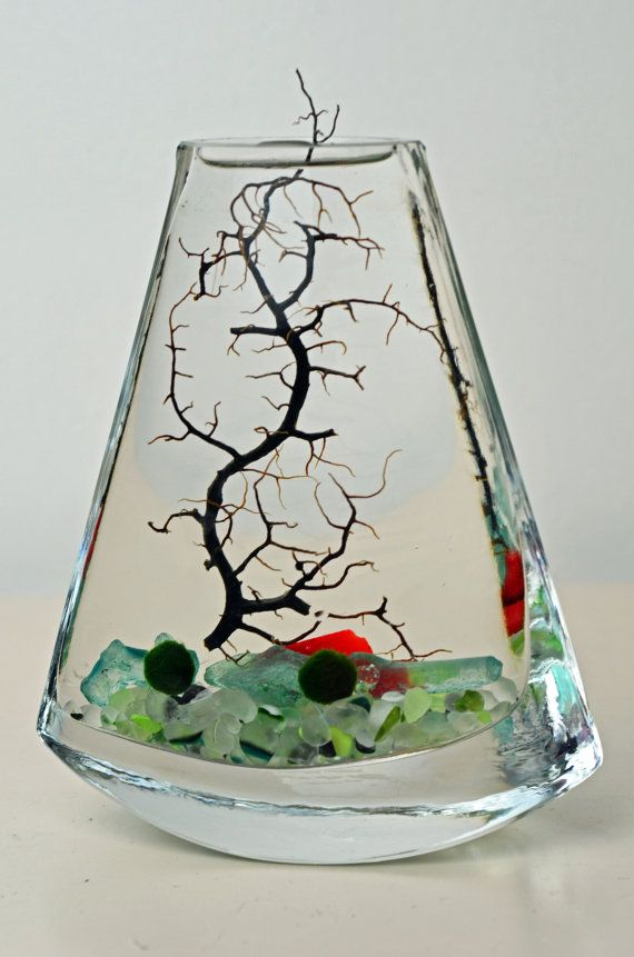 Marimo Aquatic Terrarium // Japanese Moss Ball Aquarium // Flat Vase // Sea Fan // Sea Glass // Green Gift // Home Decor