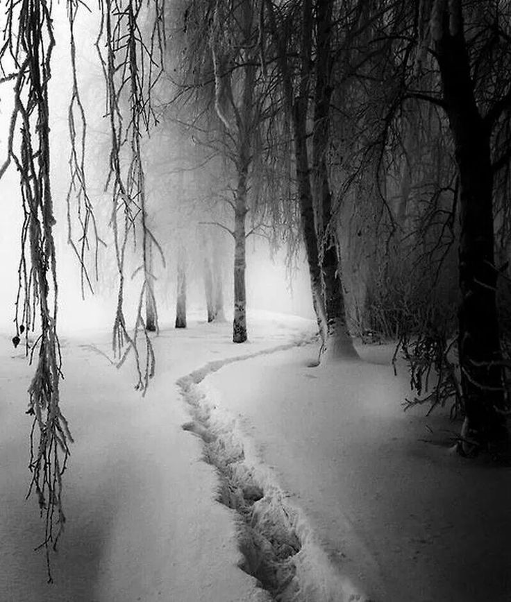 Winter by Phillipp Klinger