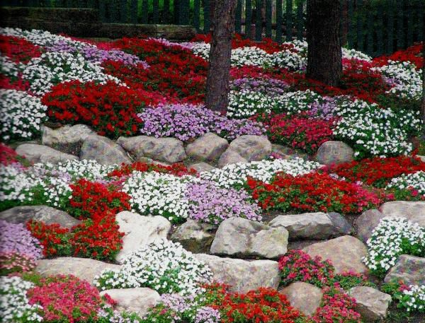 17 Best images about Rock Garden – Plants for a Rock Garden