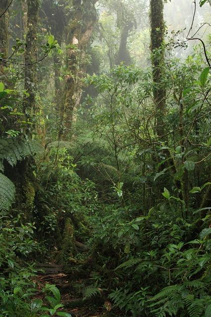 All sizes | Parque Nacional Montecristo cloud forest, via Flickr.