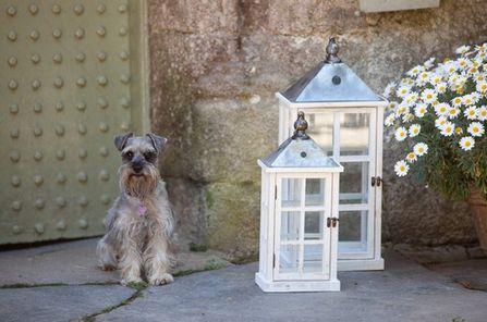 Ivory Washed Lantern Set - £85.00 - Hicks and Hicks