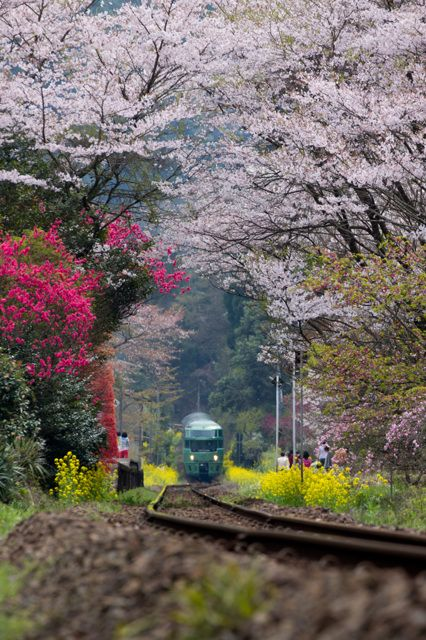 JR Kyushu limited express train Yufuin no Mori (Forest of Yufuin) runs from Hakata to Yufuin, Japan [ゆふいんの森] 号
