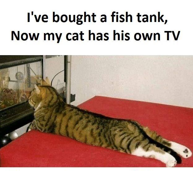 Bought A Fish Tank