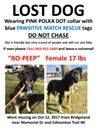 Still missing little timid black w/ tan & white foster dog #bridgeland #renfrew LAST sighting was a week ago Pls rt watch share help to find BoPeep  DO NOT CHASE!  YYC Pet Recovery shared Pawsitive Match Rescue Foundation's post. MISSING FOSTER DOG - BO-PEEP - DO NOT CHASE   UPDATE: Spotted Sat Oct.21 @ 11:30 pm. Running south on Edmonton trail and turned into Bridgeland Community.   Spotted Saturday Oct. 21 @ 6:30pm. Running along railway tracks behind science centre!! Spotted again Oct 21…