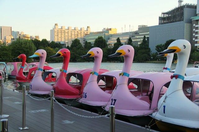 Ueno Park in Tokyo for Swan boats, temples, and the Tokyo museum (closes at 6pm)
