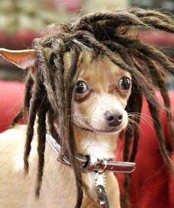Dog Haircuts Gone Really Wrong | Ya Mon
