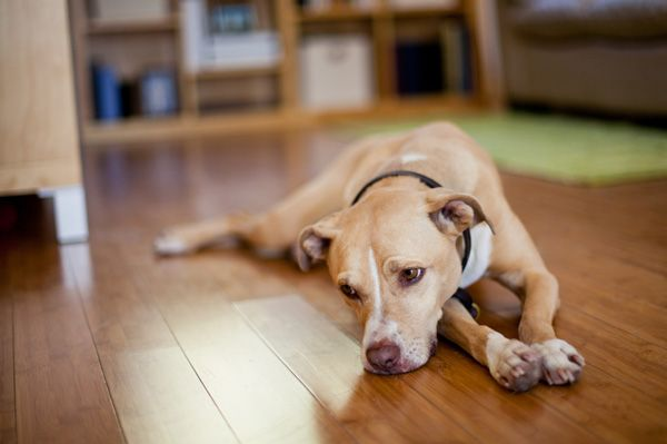 Get the facts on breed-specific legislation