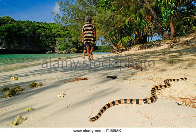 Find The Perfect Sea Snake Stock Photo