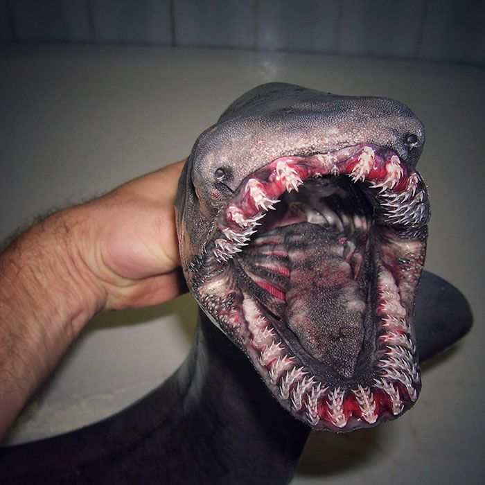 16 photos de poissons effrayants qui sortent d'un film d'horreur !