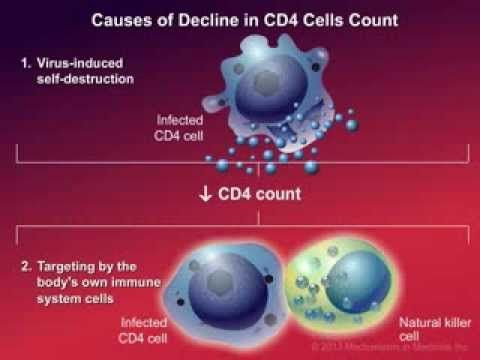 CD4 T-cells (a type of white blood cell) are important to your body's defence against infections. This animation describes how your immune system is weakened...