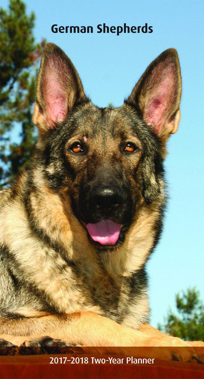 17 Terbaik Ide Tentang Anjing Penggembala Jerman Di Pinterest