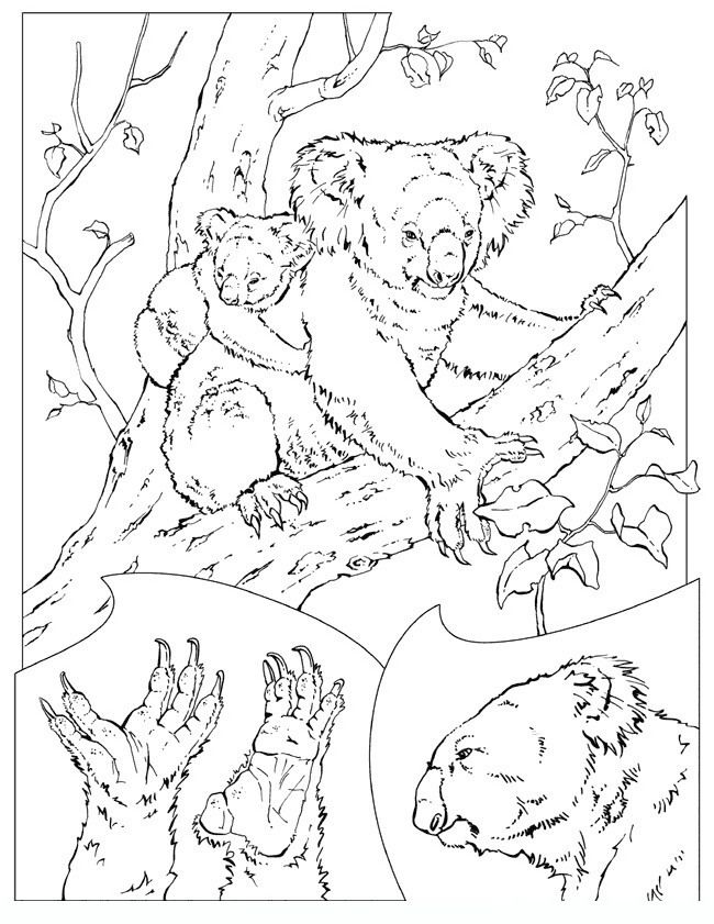64 best Animal Coloring Pages images on Pinterest Coloring pages
