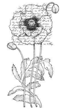 Penny Black Wood Stamp Poppy Poem Digi Prints Flower