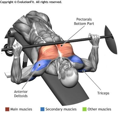 CHEST - BARBELL DECLINE BENCH PRESS