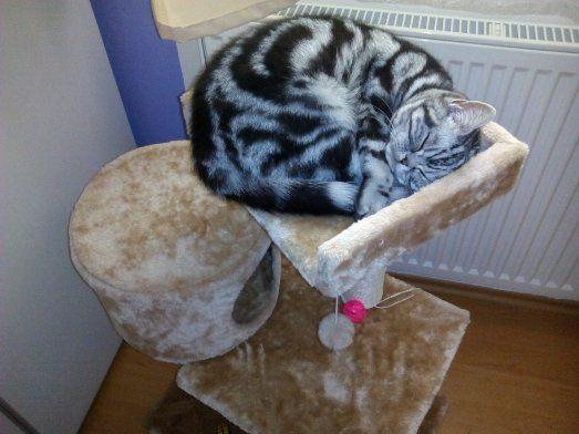 Kočka včetně výbavy za 5.000 Kč - 1kočka.jpg