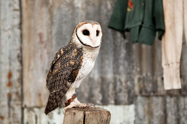 Murdoch International Students visited Caversham Wildlife Park