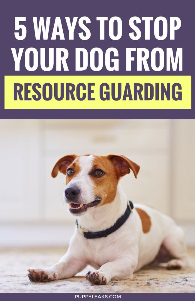 5 Methods That Will Help Reduce Resource Guarding Doggie Mommie