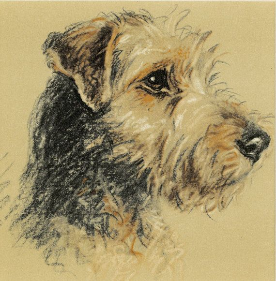 This is a vintage print of an adorable Welsh Terrier. It comes from a first edition book, C.1939. It is by the artist Lucy Dawson, renown