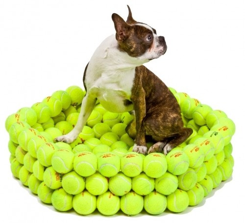 tennis ball bed!   Not sure it looks comfy though.