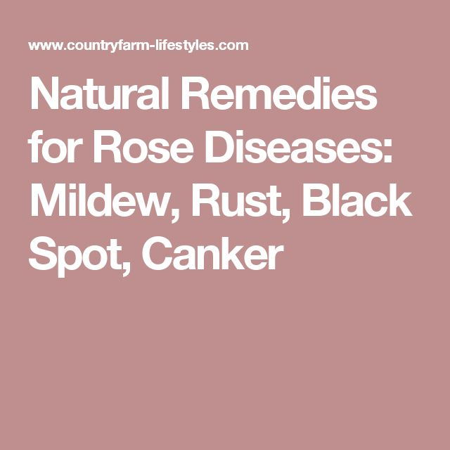 Natural Remedies for Rose Diseases: Mildew, Rust, Black Spot, Canker