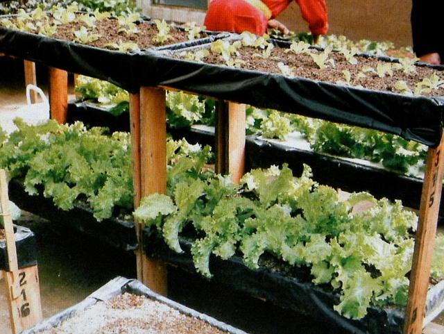 wood pallet micro garden