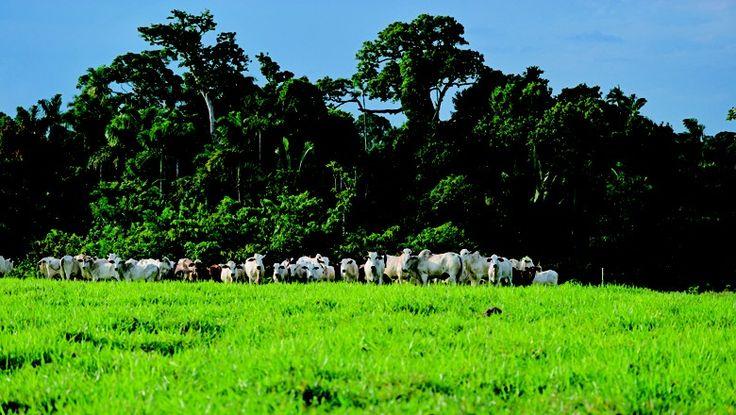 A integração lavoura-pecuária-floresta está entre os planos para reduzir desmatamento e emissões de gases de efeito estufa