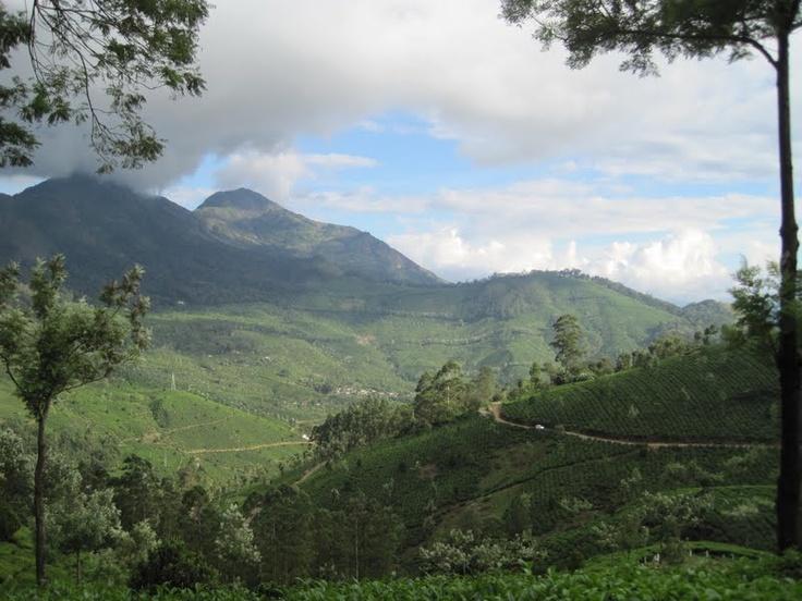 Scenic Nature in Munnar, Kerala