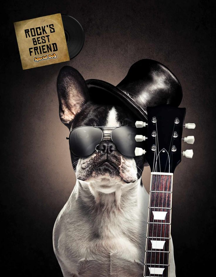 Special Dog: Slash