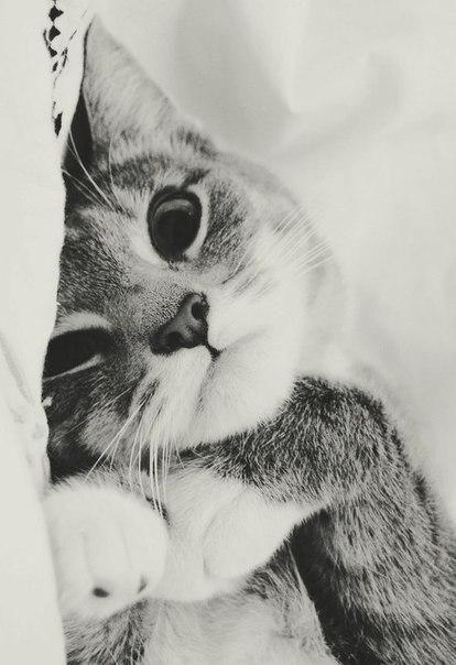 furry little friend.