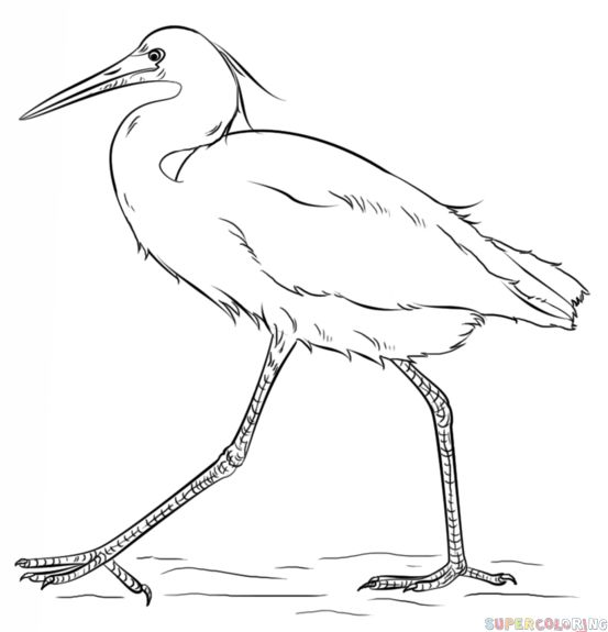 How to draw a snow egret step by step. Drawing tutorials for kids and beginners.