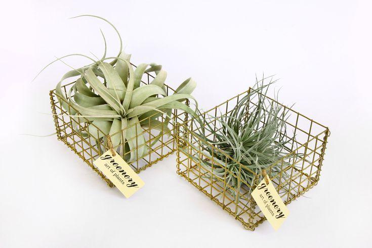 Gabion cage! #greenery #plants #succulents #airplants #gabion #greece