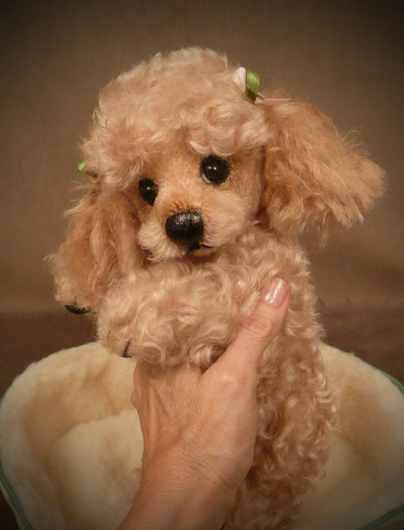 """Tuffy"" the Poodle Palm Puppy...I'd say this was a real pup but the toes looked stitched                                                                                                                                                     More"