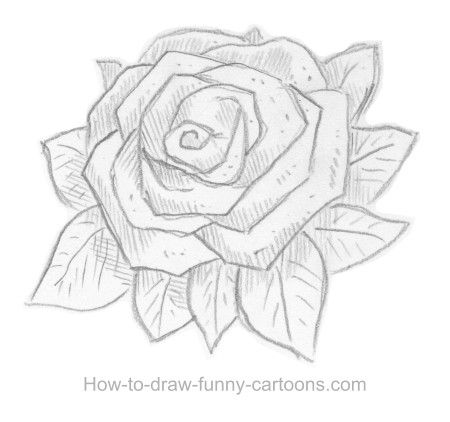 How to sketch a rose, part 7