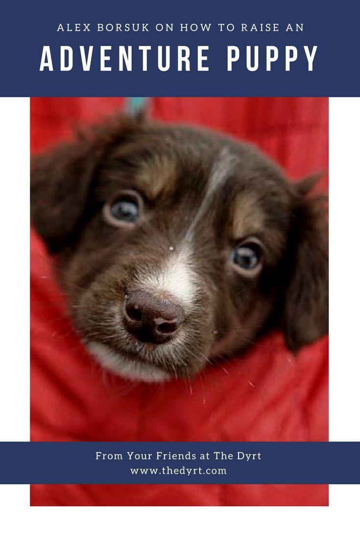 best puppy tips u health images on pinterest doggies animal