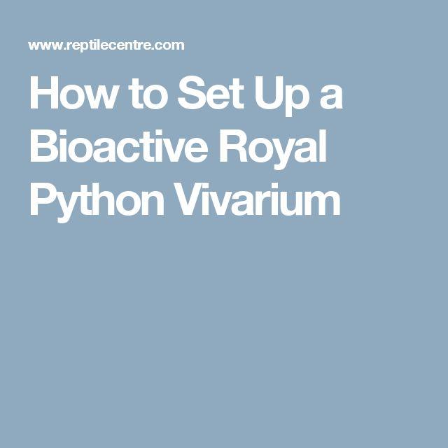 How to Set Up a Bioactive Royal Python Vivarium