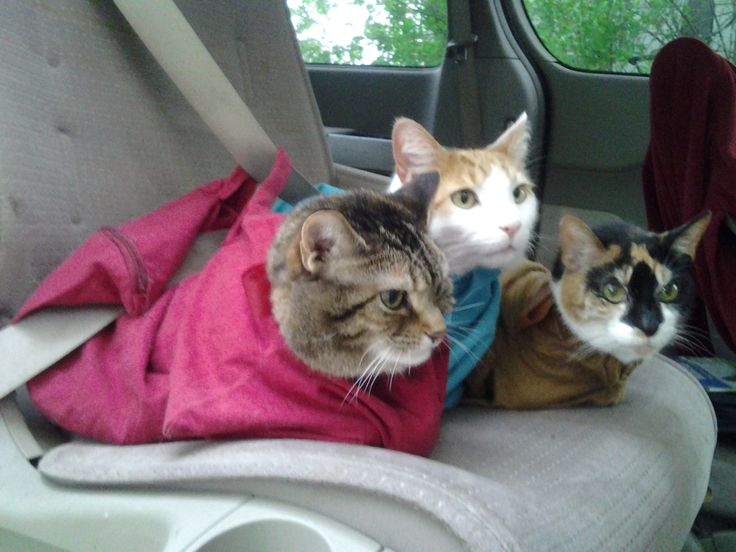 Only thing is--- in hot climates, if your car isn't VERY cool first, this might stress a cat more. Keep on FRONT seat with A/C. a bag-style carrier designed especially for cats. The cat can't get loose outside or while medicine is being administered.The restraint is gentle, comfortable because the bag is soft and roomy, allowing the cat to move inside of it. The cat stays calmer. The bag is easier to put on the cat than it is to put him in a crate or wrap a towel around him to give medicine.