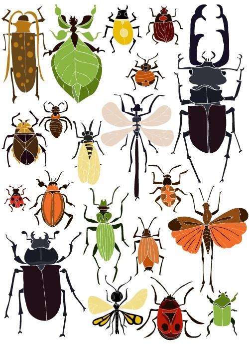 Bzzzzz... leuk om te weten wekle insecten je buiten tegen komt: Ansichtkaart Insecten | NIEUW | Buiten de Lijntjes