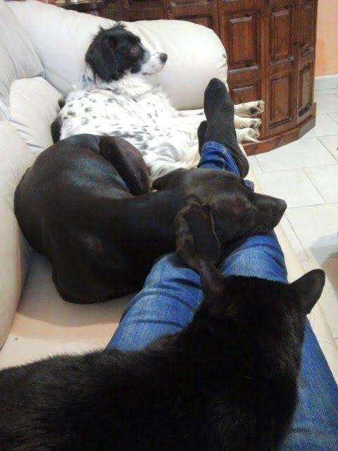 Crazy and Sweet Pets: Medicina di laboratorio: come leggere le analisi d...