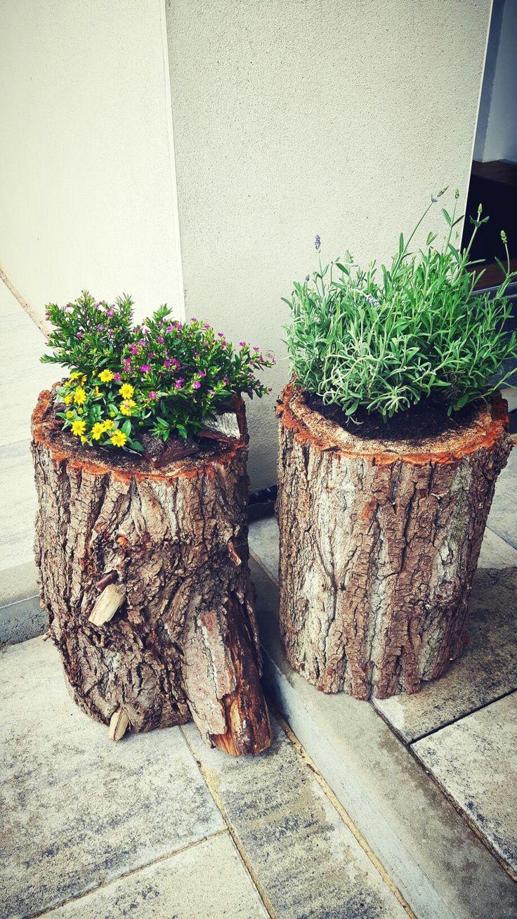 Hohler Baumstamm bepflanzt