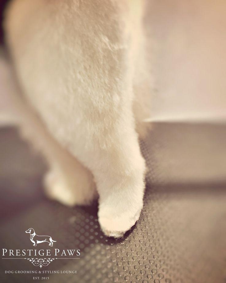 Teddy Bear Leg Prestige Paws Style
