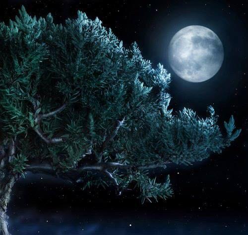 """""""Bussa la luna alla finestra della notte... Adesso è l'ora di spalancare il cuore per liberare i sogni""""  - ©Riflessi d'acqua –  Riflessi d'acqua-diventa fan"""