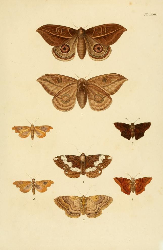 v. 2 (1833) - Recueil d'observations de zoologie et d'anatomie compar : - Biodiversity Heritage Library