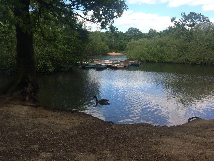 Snaresbrook Ponds