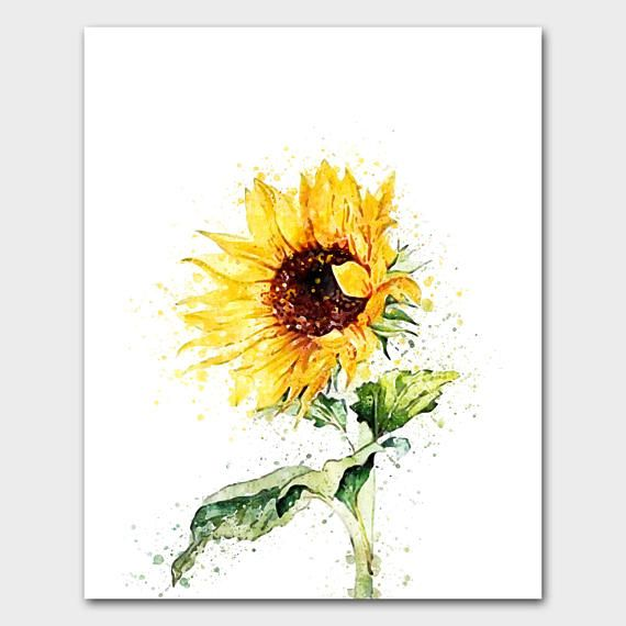 Watercolor Flowers Spring Flowers Hand Drawn Flowers Sunflower
