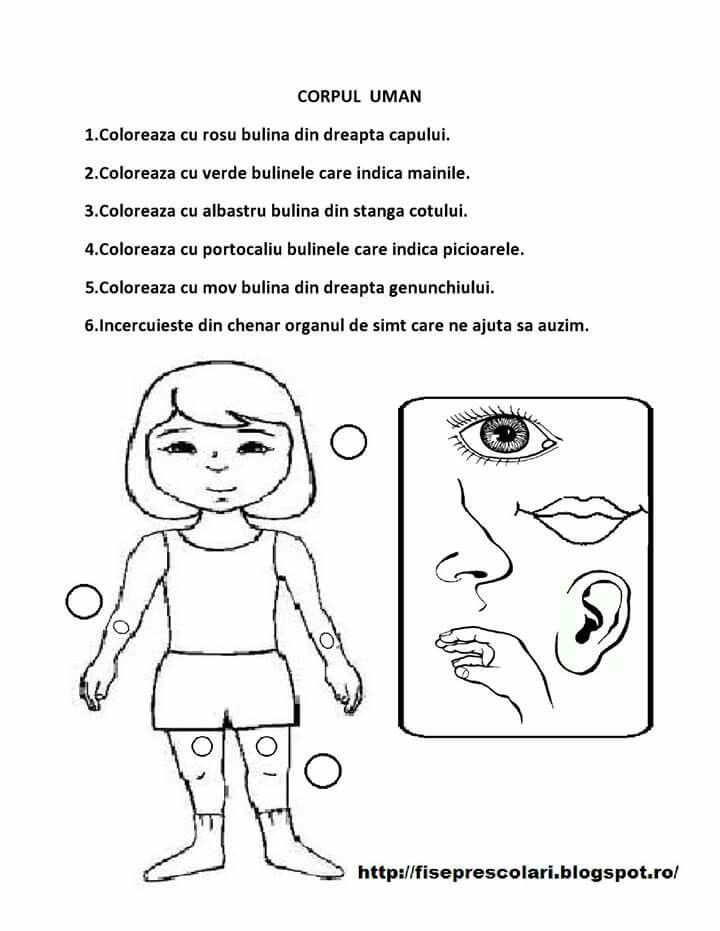 Corpul uman _ fisa