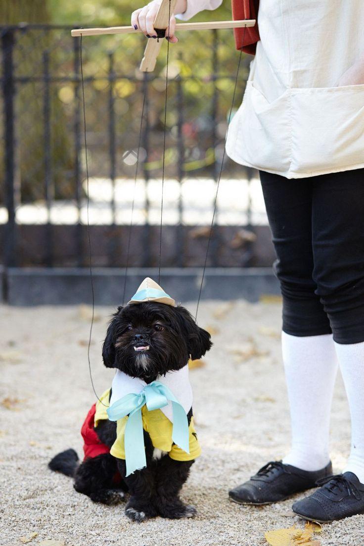 Dog Halloween Costumes - Pet Holiday Ideas
