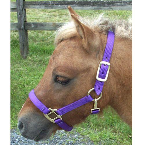 Miniature Horse Nylon Halter