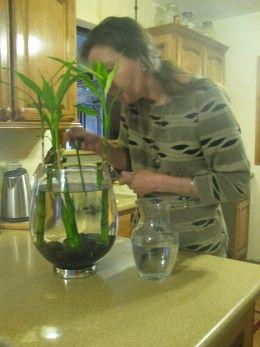 Beta Or Betta Fish And Bamboo Living Together Drinks Amp Shots Betta Fish Betta Fish Tank