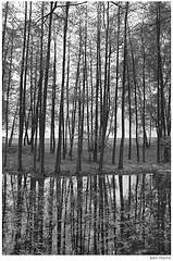 Forest in Katowice by Ben Heine #EasyNip