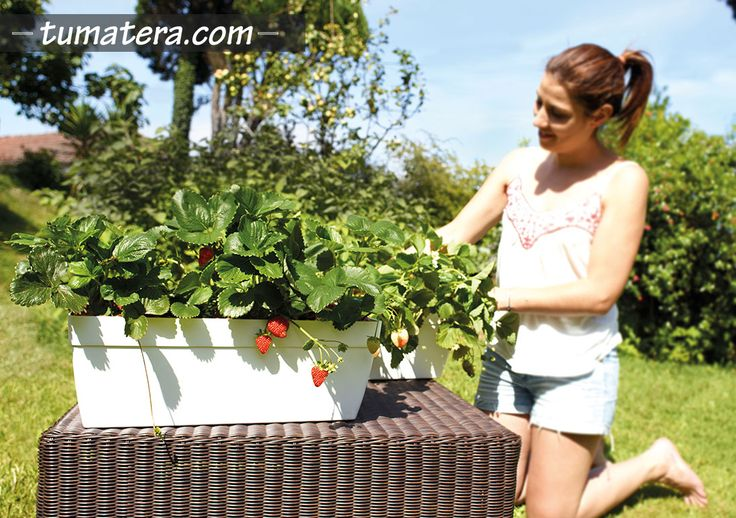 Encuentralas en: http://www.tumatera.co/products/mpa-501918-jardinera-capri/